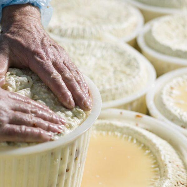 Come nasce un formaggio autentico